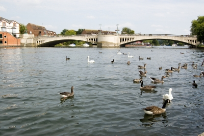 River Ouse in Reading